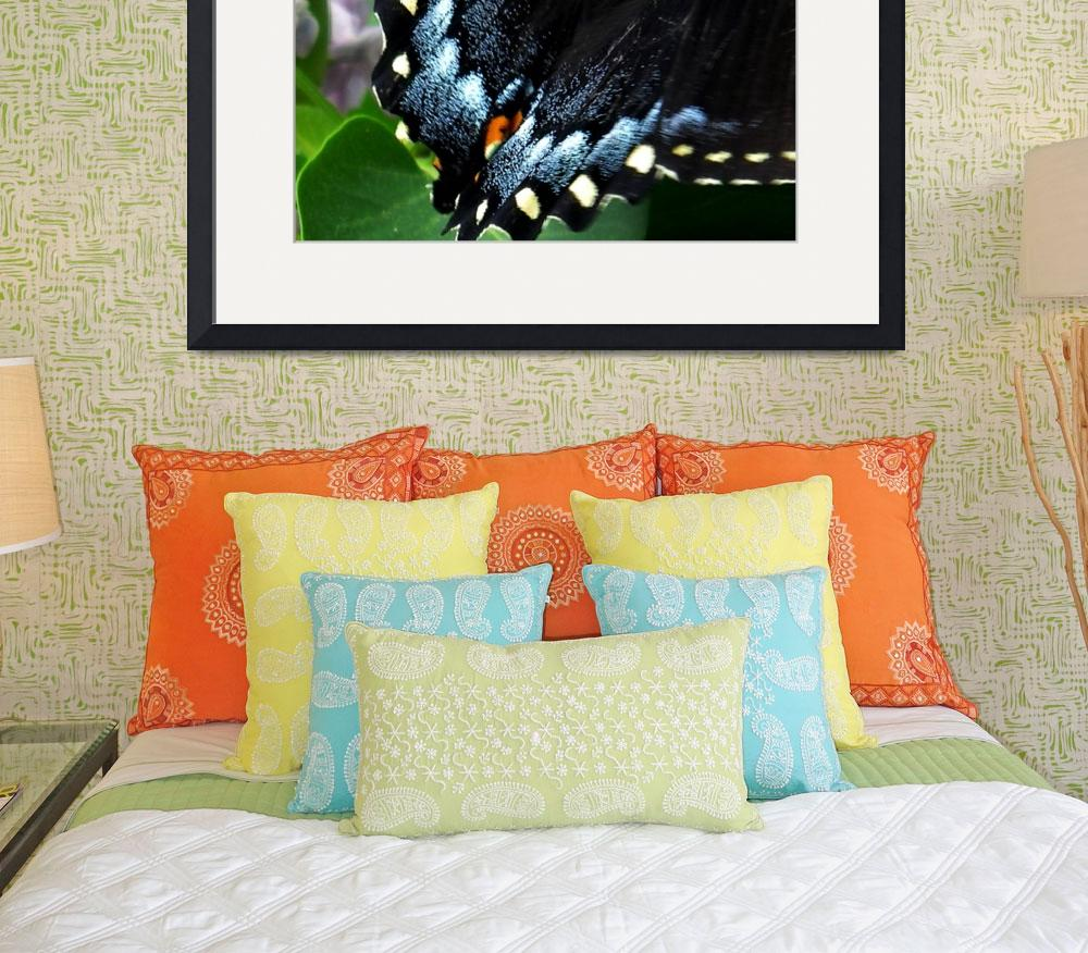 """Butterfly at Rest&quot  (2009) by magnoliadorn"