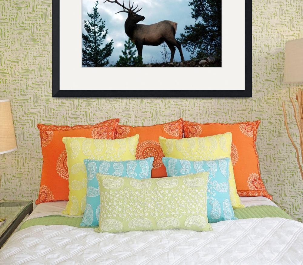 """Canadian Rockies - Jasper Elk&quot  (2008) by HBarrison"