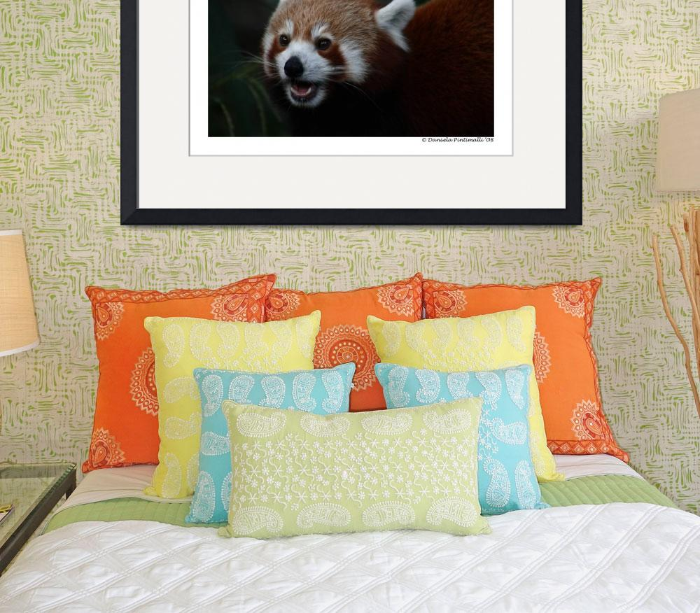 """Red Panda Portrait&quot  (2008) by WildVisuals"