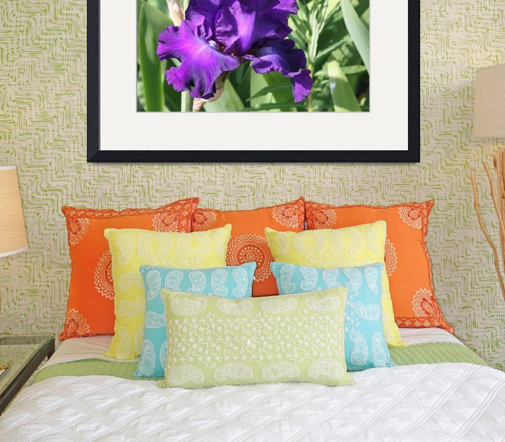 """Purple Iris FT3012&quot  by marygaines"