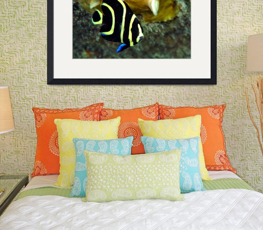"""Juvenile Angelfish&quot  (2004) by JoaoPonces"
