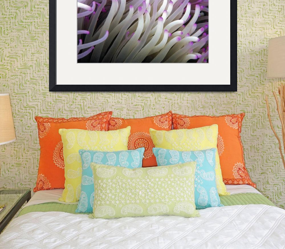 """Micronesia, Anemone Tentacles&quot  by DesignPics"