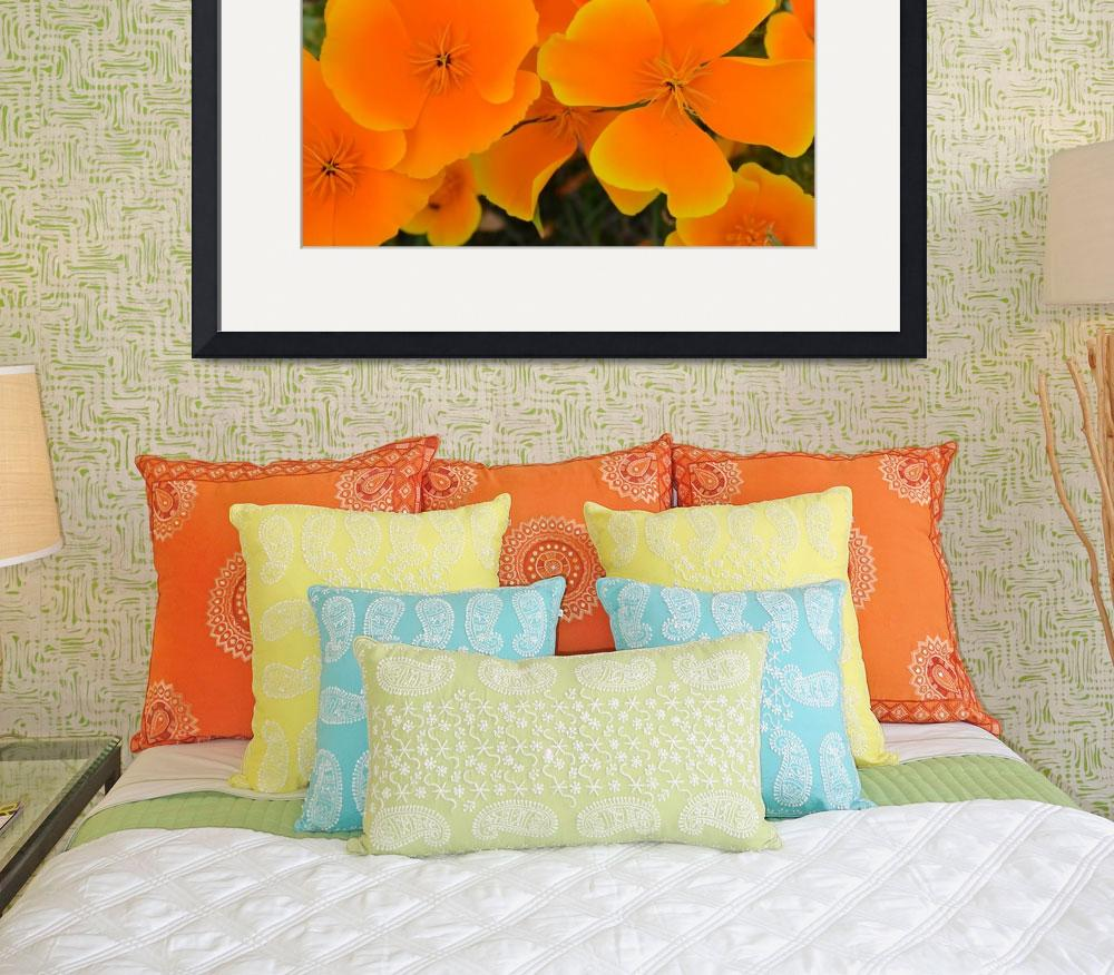 """Beautiful Orange Flowers&quot  (2011) by PatriciaSanders"