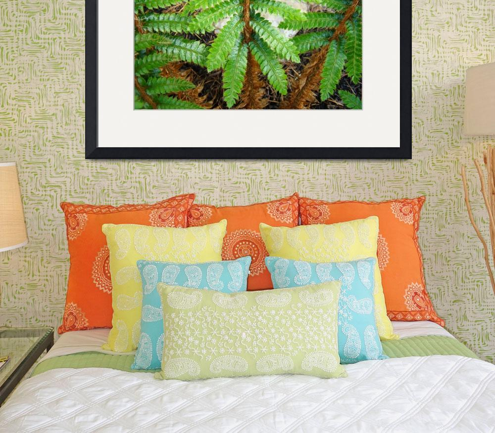 """Forest Ferns Branches Leaves Art Prints Fern&quot  (2014) by BasleeTroutman"