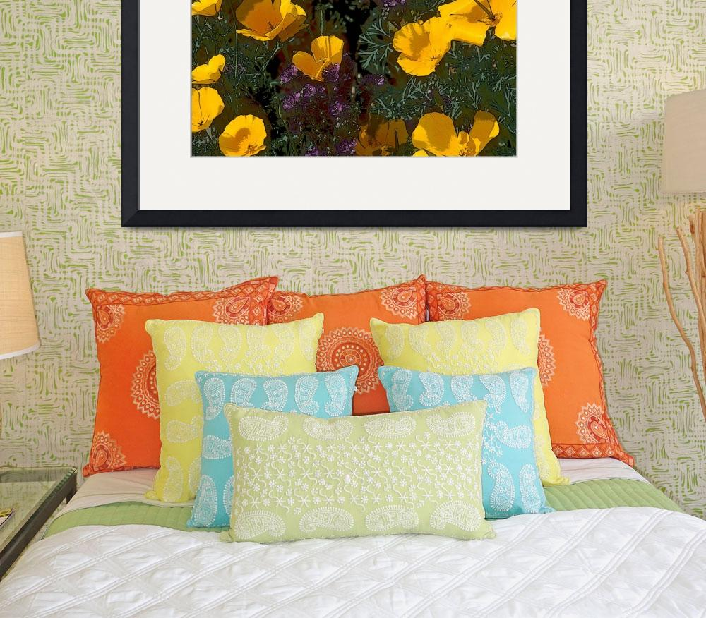 """California Poppies in Arizona&quot  (2005) by kphotos"