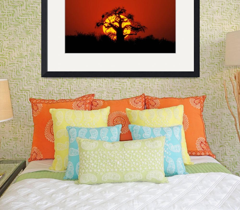 """Sunset Baobab&quot  (2008) by delende"