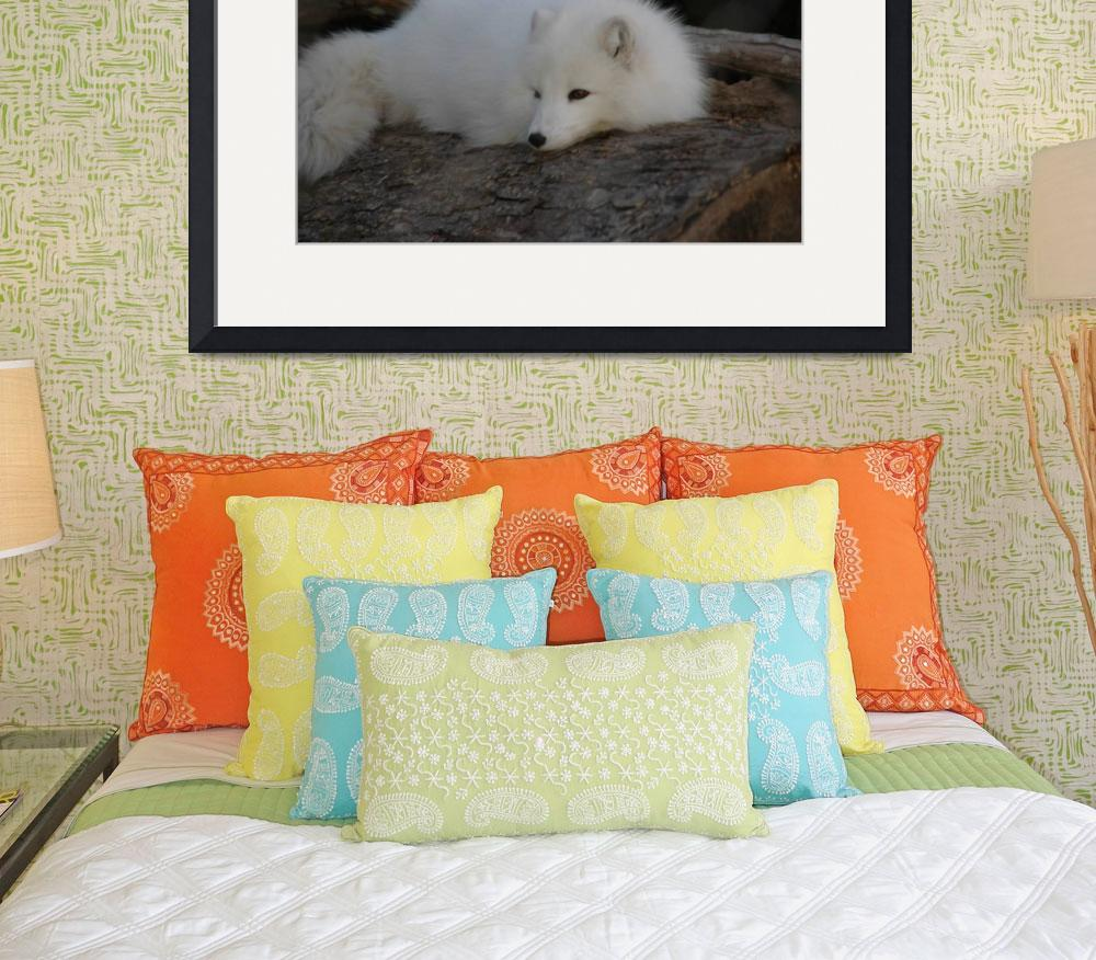 """Arctic Fox&quot  (2007) by ldfranklin"