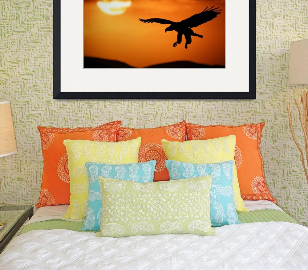 """Sunset eagle&quot  by RIANA"