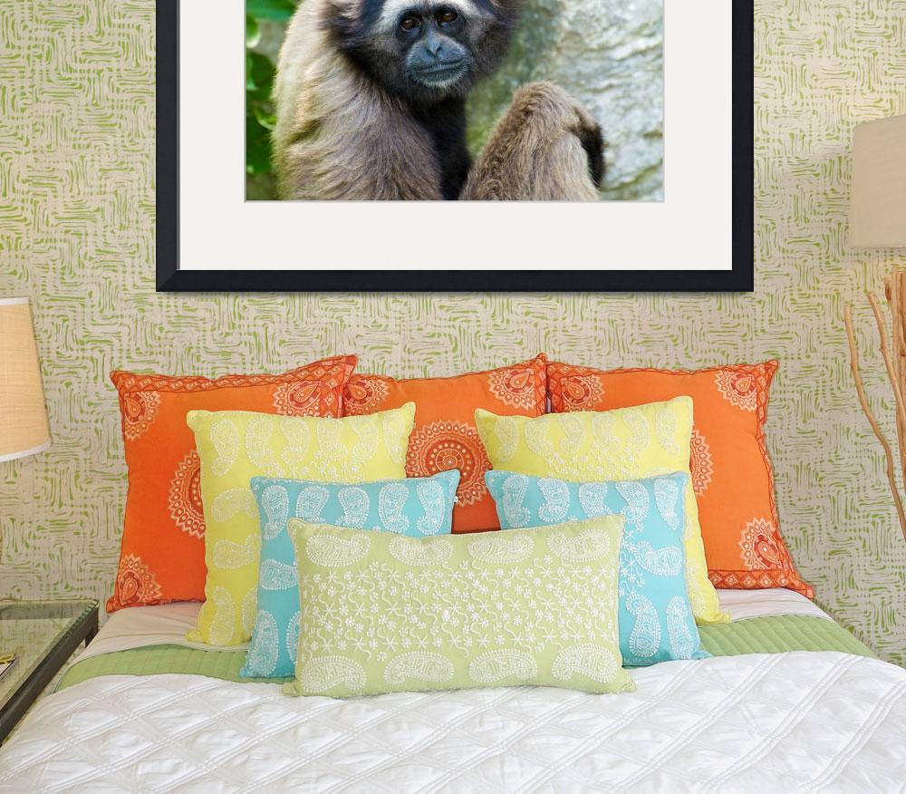"""Gibbon 1&quot  (2009) by nicolevaughan"