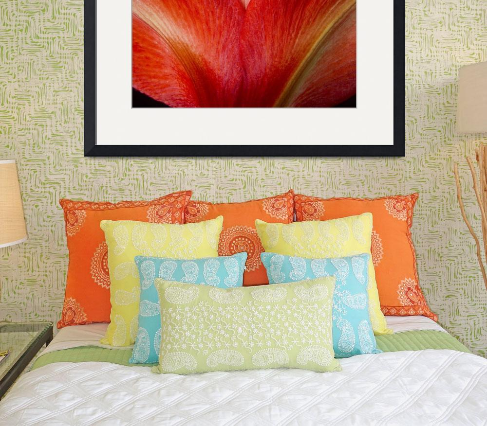 """Red Orange  Colorful Amaryllis Flower Petals&quot  (2011) by lightningman"