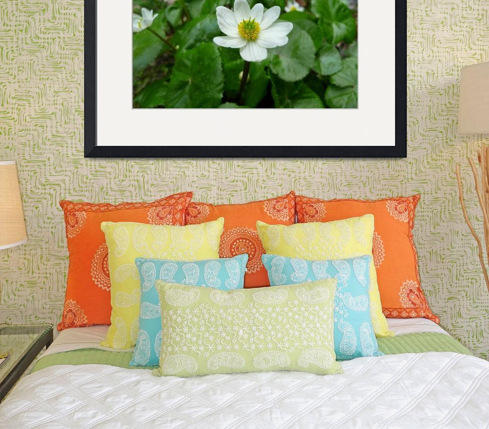 """White Marsh Marigolds&quot  (2009) by redvi0let"