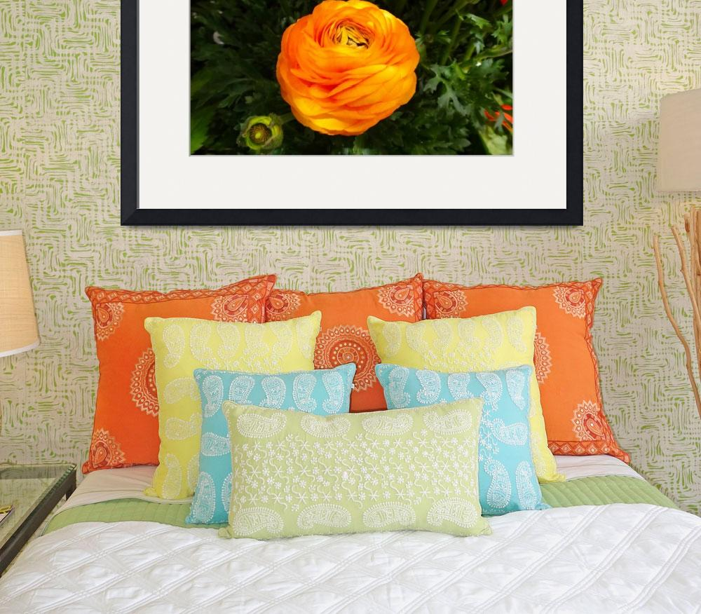 """Orange Ranunculus&quot  (2014) by heeltote"