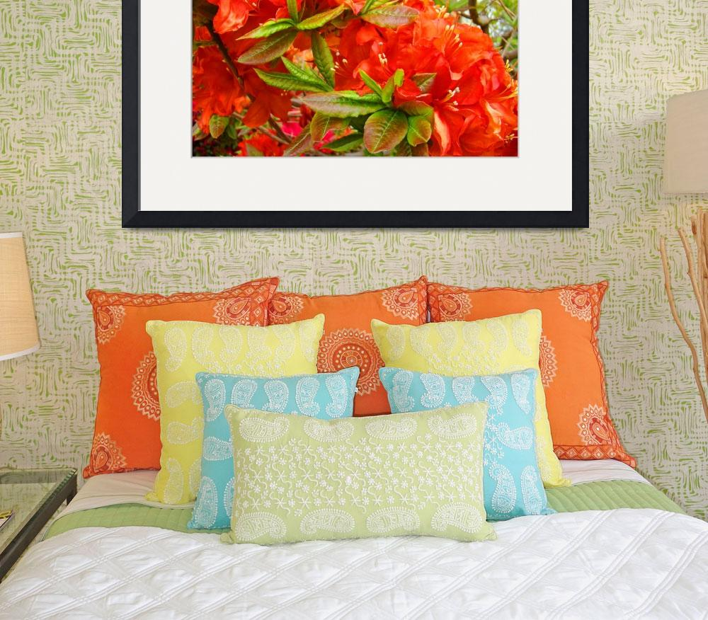 """Azaleas Orange Rhododendrums Flowers Art Prints&quot  (2009) by BasleeTroutman"