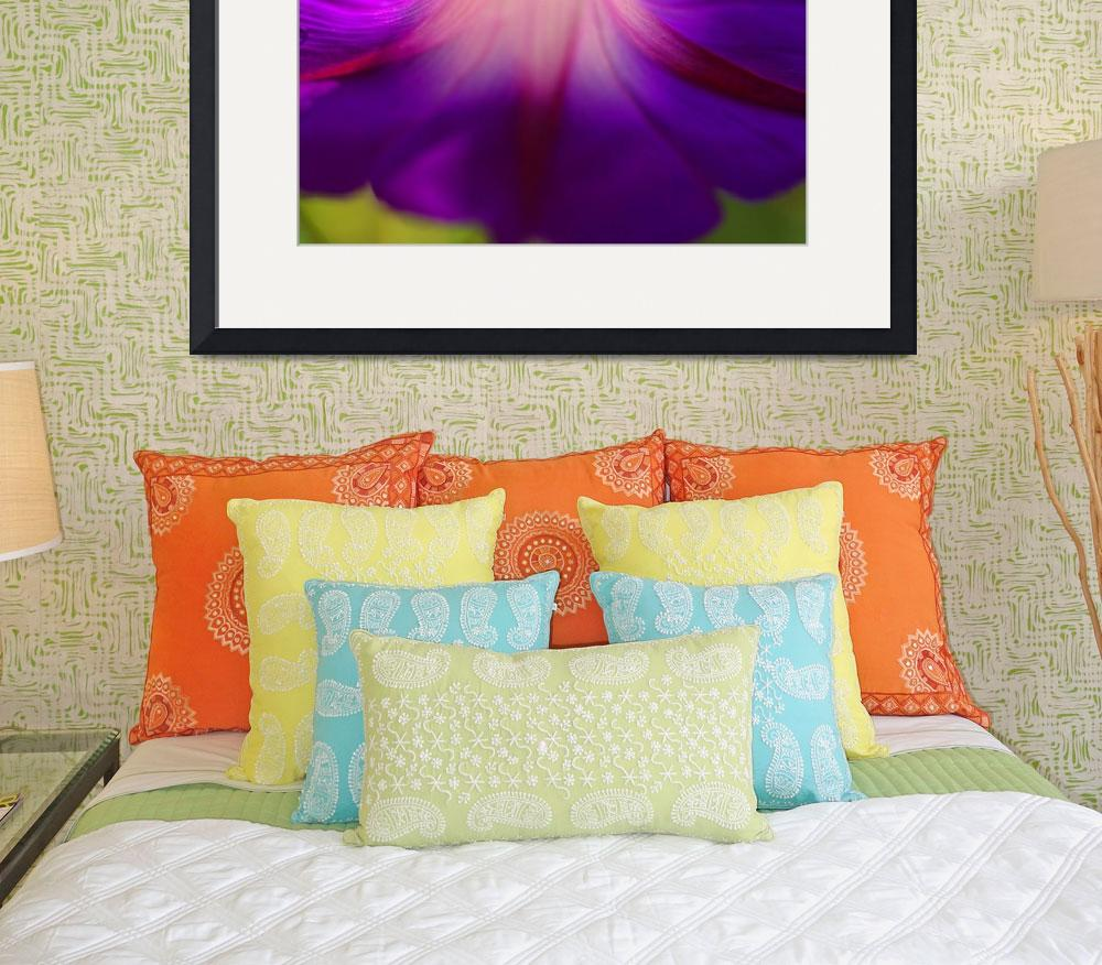 """Purple Morning Glory&quot  (2010) by MarinaCastillo"