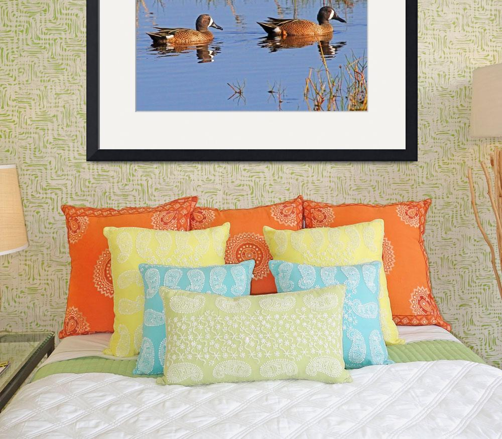 """Blue-winged Teal&quot  (2012) by shelshots"