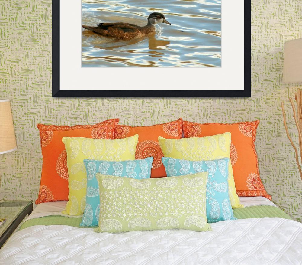 """Duck Swimming&quot  (2013) by rhamm"