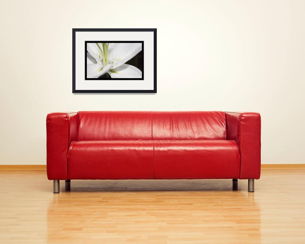 """Serene Sanctuary Photo (white lily)&quot  (2007) by Kari-Gunter-Kremers"