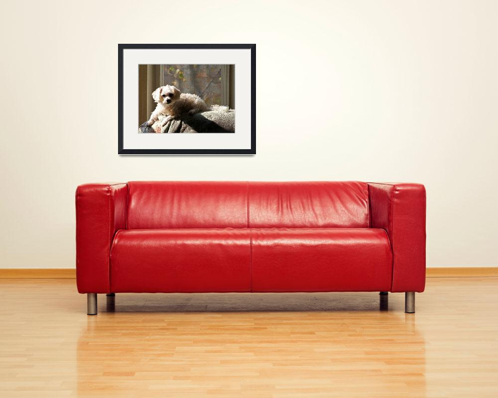 """Dog on Chairback&quot  (2012) by KsWorldArt"