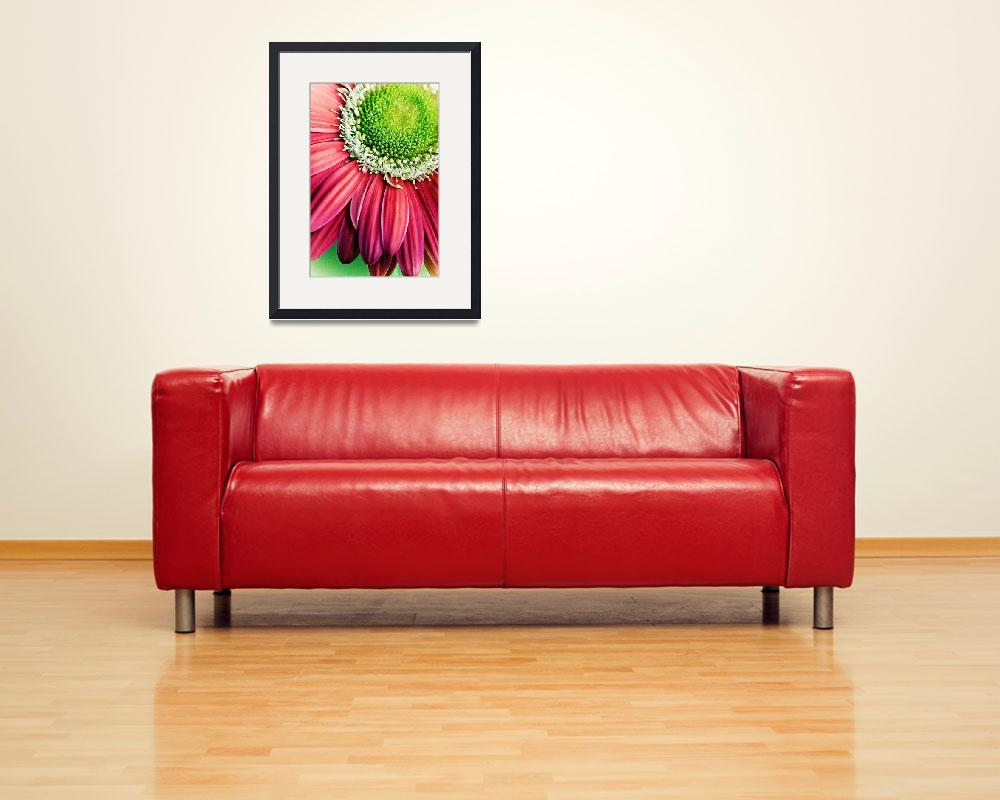 """Gerbera&quot  (2010) by carolyngallo"
