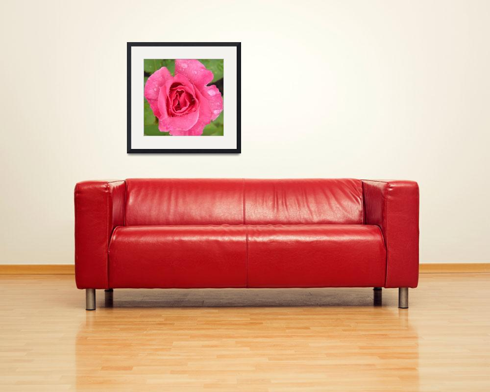 """rose 15&quot  (2010) by sb1photography"