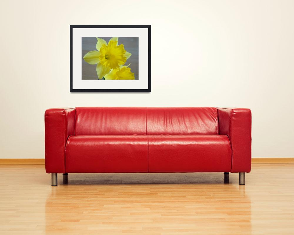 """Spring Daffodils Daffodil Flowers Art Prints&quot  (2009) by BasleeTroutman"