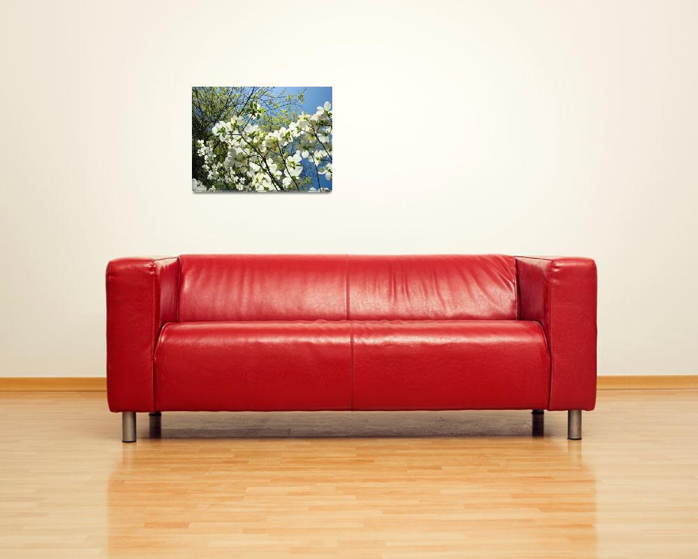 """DOGWOOD TREES Art Prints White Dogwood Flowers&quot  (2009) by BasleeTroutman"