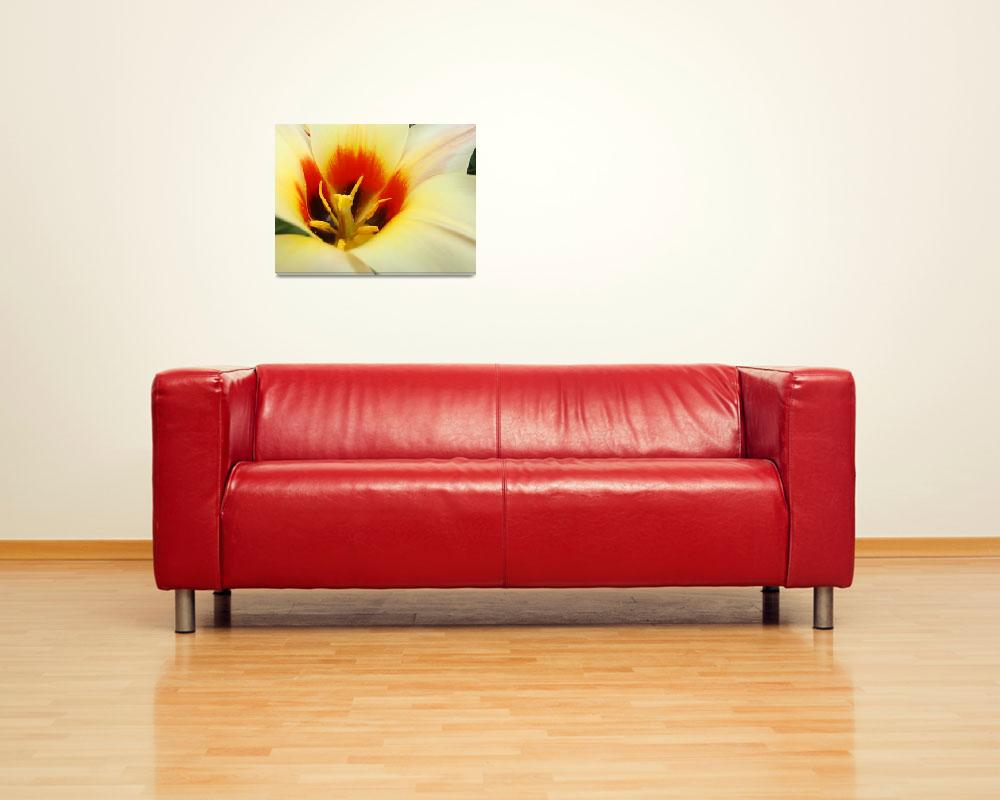 """Christmas gifts Tulip Flower art prints&quot  (2011) by BasleeTroutman"