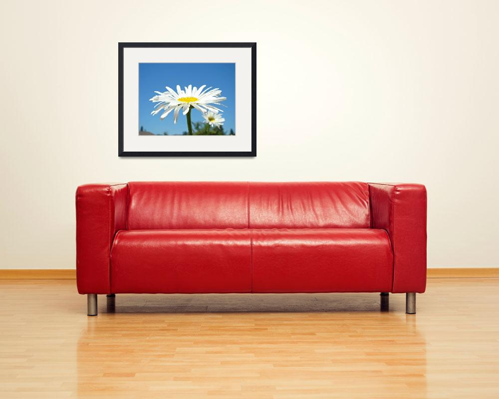 """White Daisy Floral art prints Summer Daisies&quot  (2010) by BasleeTroutman"