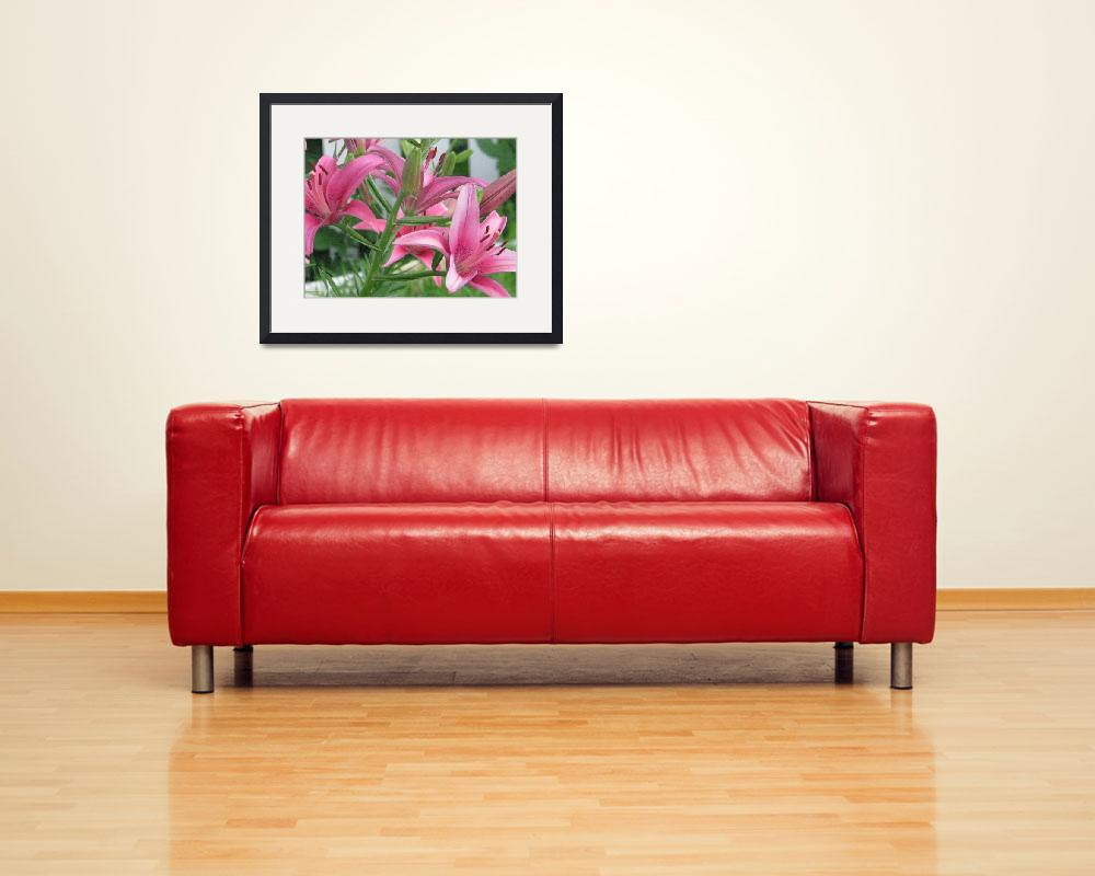 """Pink Lilies&quot  (2008) by willis-prints"