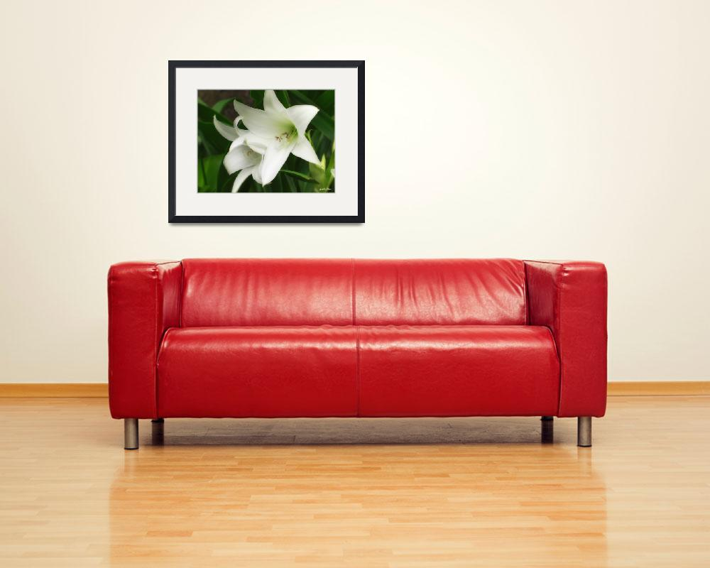 """White Crinum Lilies 1&quot  (2011) by ChristopherInMexico"