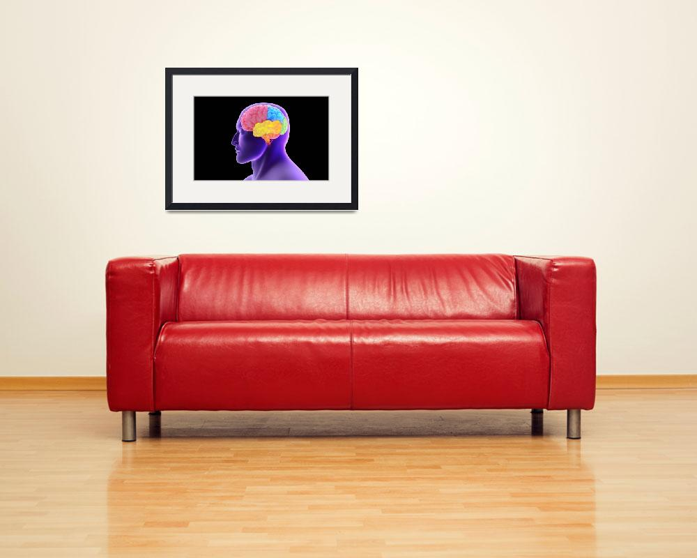 """Conceptual image of human brain&quot  by stocktrekimages"