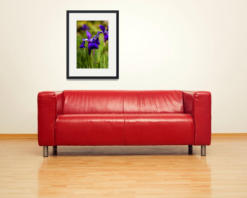 """Iris flower on green blurred background, photo tak&quot  by digidreamgrafix"