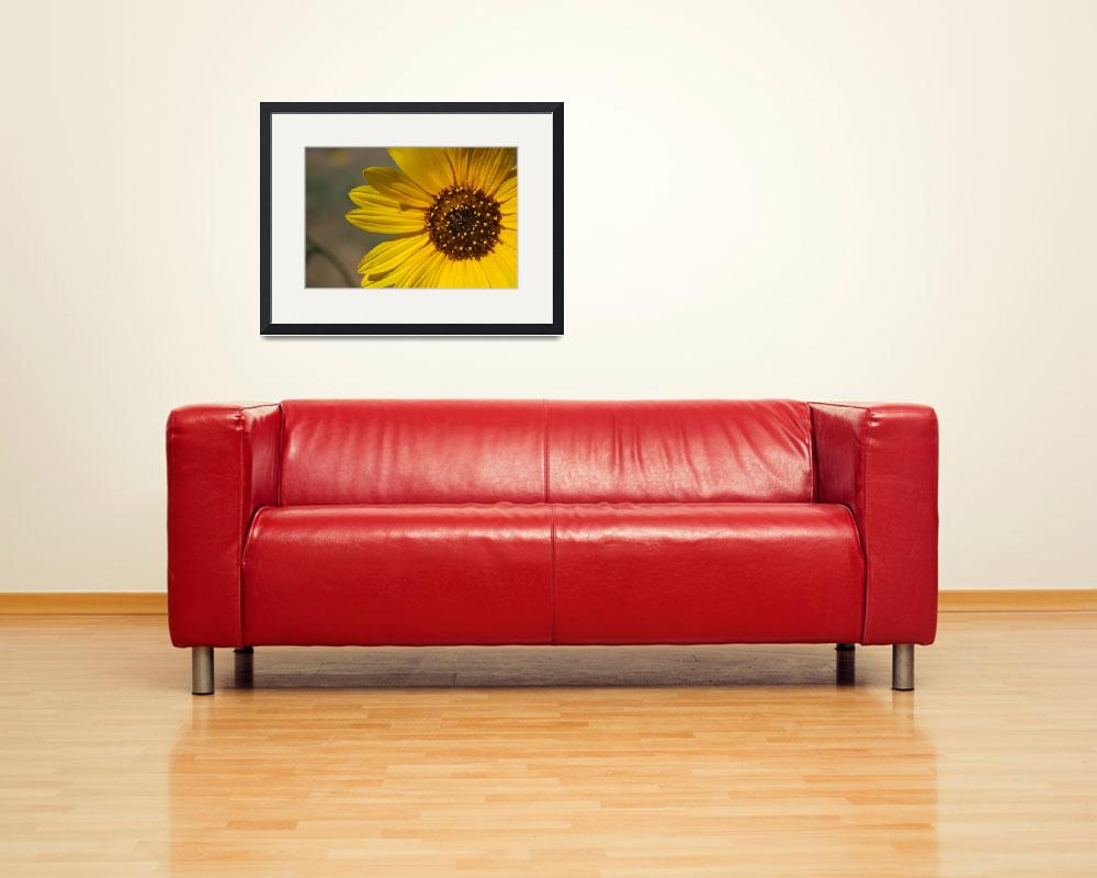 """Spring Sunflower&quot  (2010) by EpicDesignsPhotography"