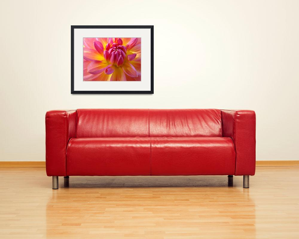 """Christmas Dahlia Art Gifts Holidays Flowers&quot  (2009) by BasleeTroutman"