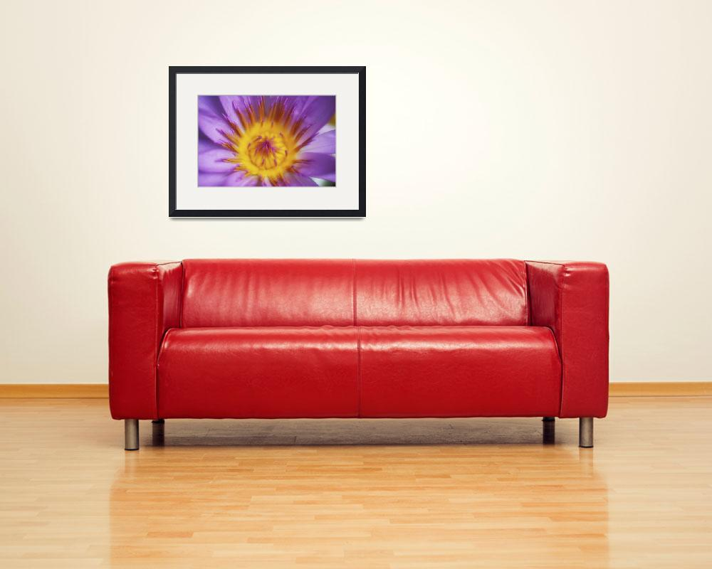 """Purple Water Lily Blossom With Yellow Center Detai&quot  by DesignPics"