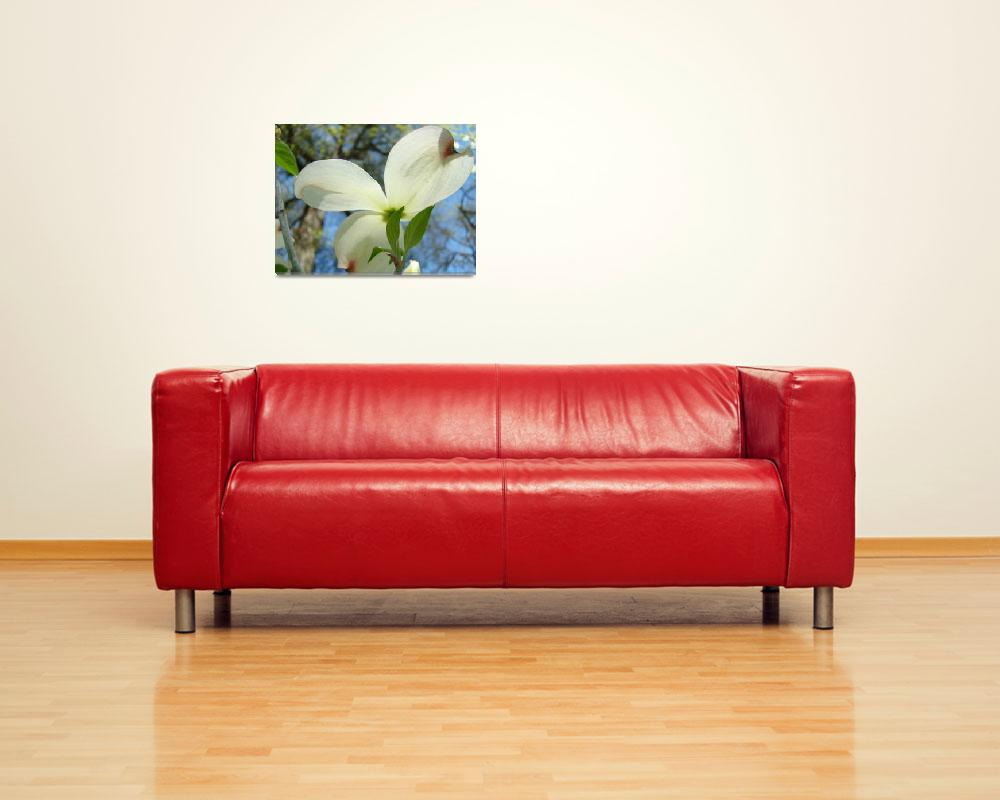 """Trees Art White Dogwood Flowers Spring Prints&quot  (2010) by BasleeTroutman"