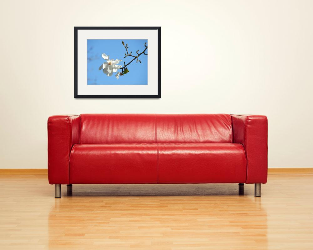 """Blue Sky art prints White Magnolia Flowers&quot  (2011) by BasleeTroutman"