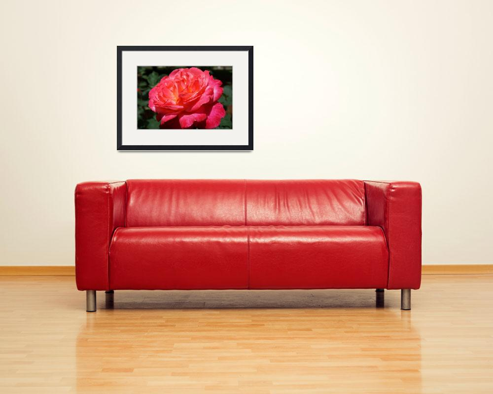 """Red Rose Flower Art Prints Floral Roses&quot  (2014) by BasleeTroutman"