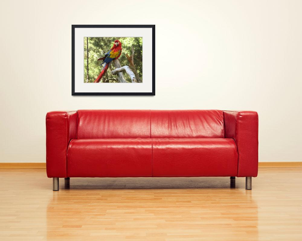 """Red McCaw Parrot&quot  (2008) by ValeriesGallery"