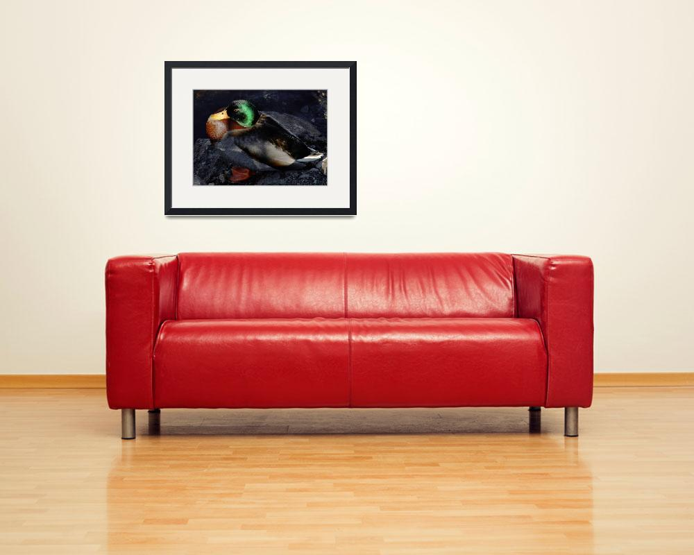 """Male Mallard&quot  (2012) by bavosiphotoart"