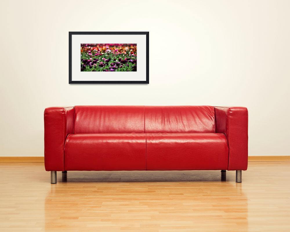 """Spring Flower Panorama&quot  (2011) by johncorney"