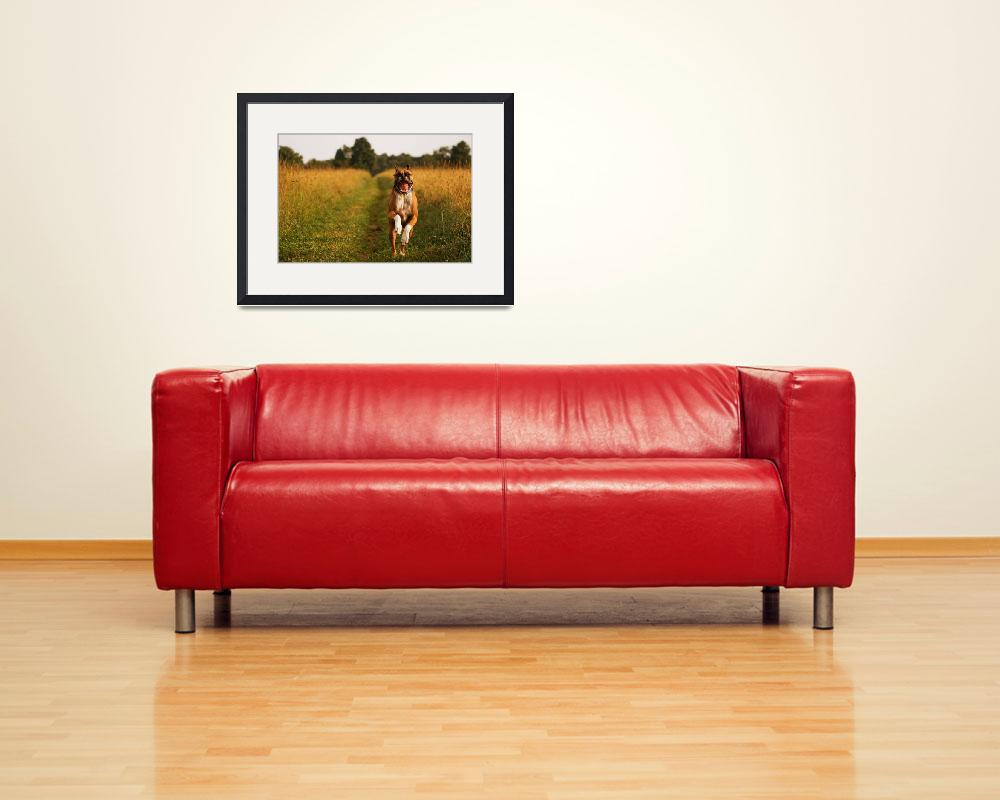 """Boxer Dog Running Happily Through Field Photo Prin&quot  (2010) by StephsShoes"