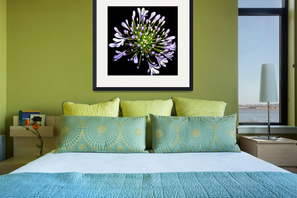 """Purple Allium Hybrid Flower&quot  (2008) by budo"
