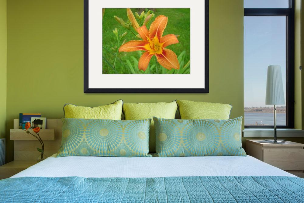 """Tiger Lily&quot  (2006) by AdirondackPhotoDesigns"