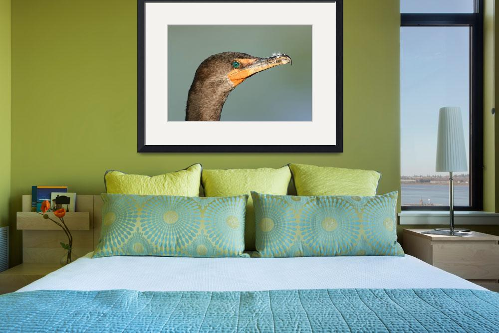 """Double-Crested Cormorant&quot  (2007) by DenisW"