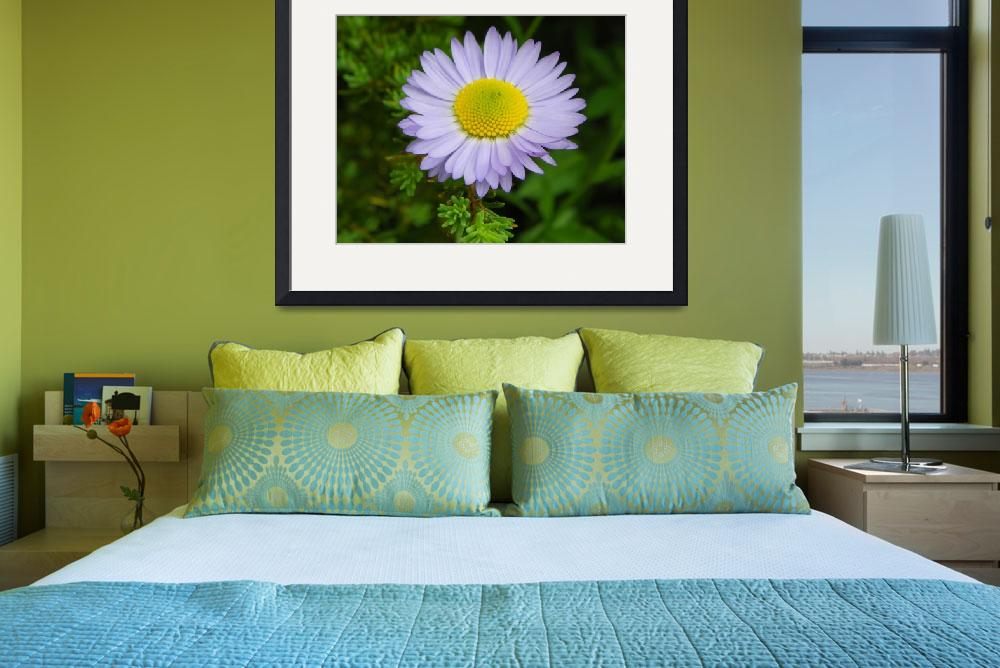 """Botanical - Subalpine Daisy - Outdoors Floral&quot  by artsandi"