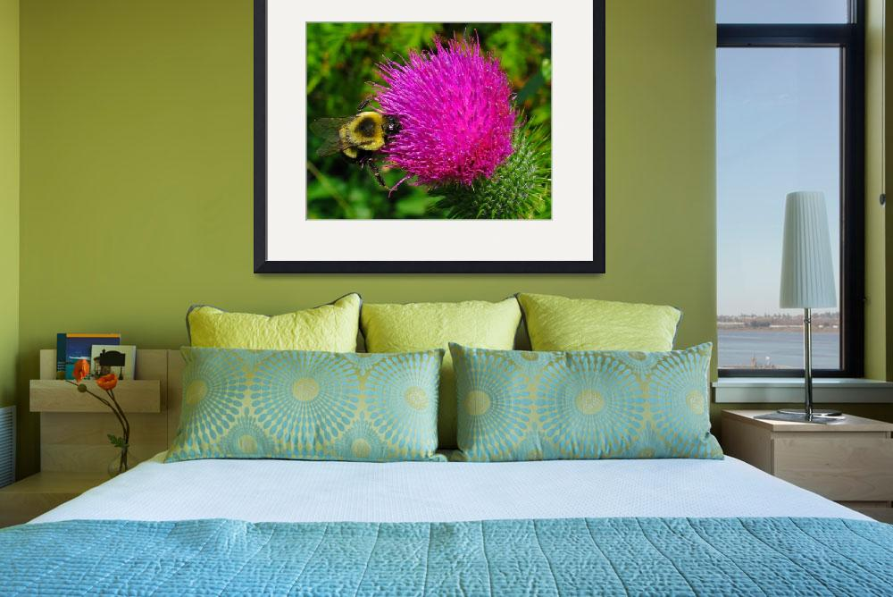 """Bee on Bull Thistle&quot  (2007) by bavosiphotoart"