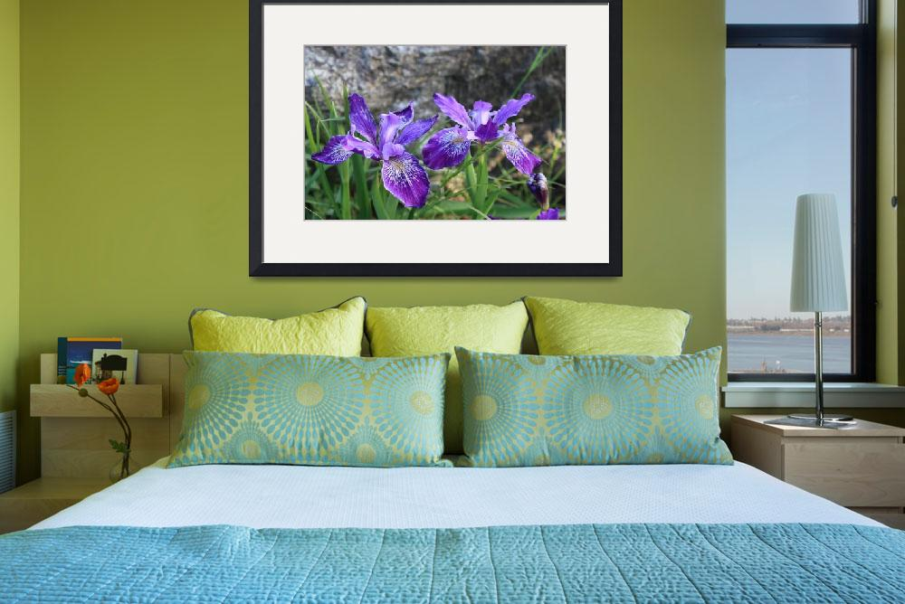 """Purple Irises with Gray Rocks&quot  by Groecar"