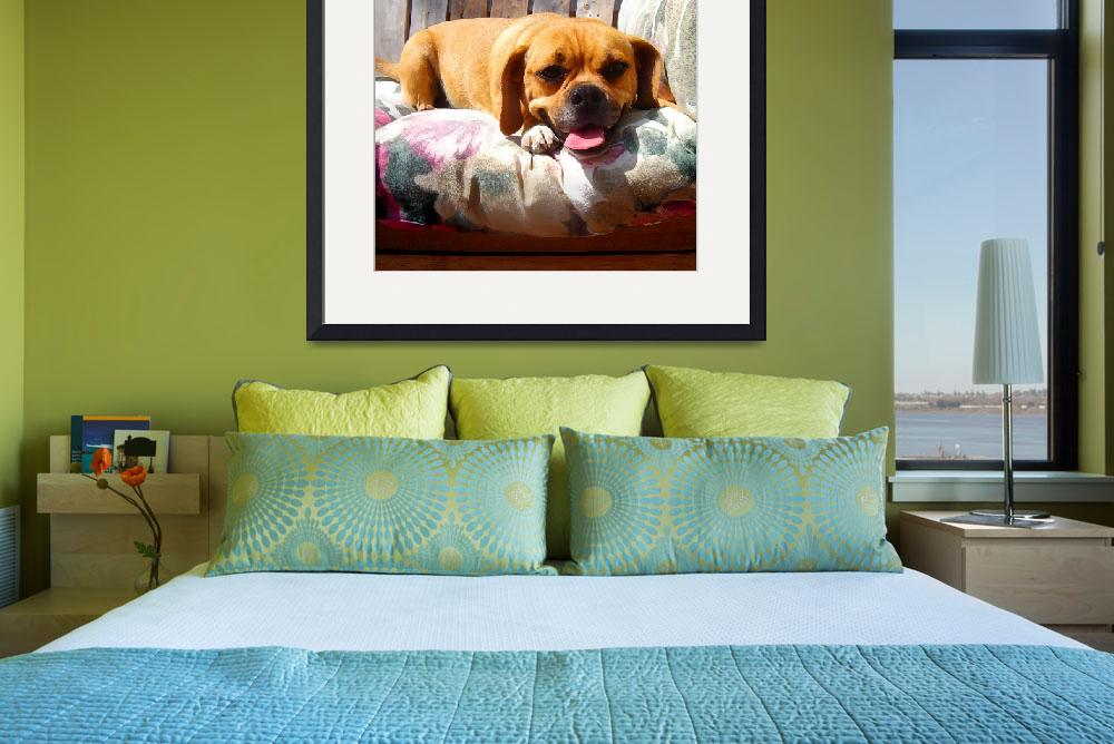 """Puggle Lounging&quot  (2009) by AmyVangsgard"