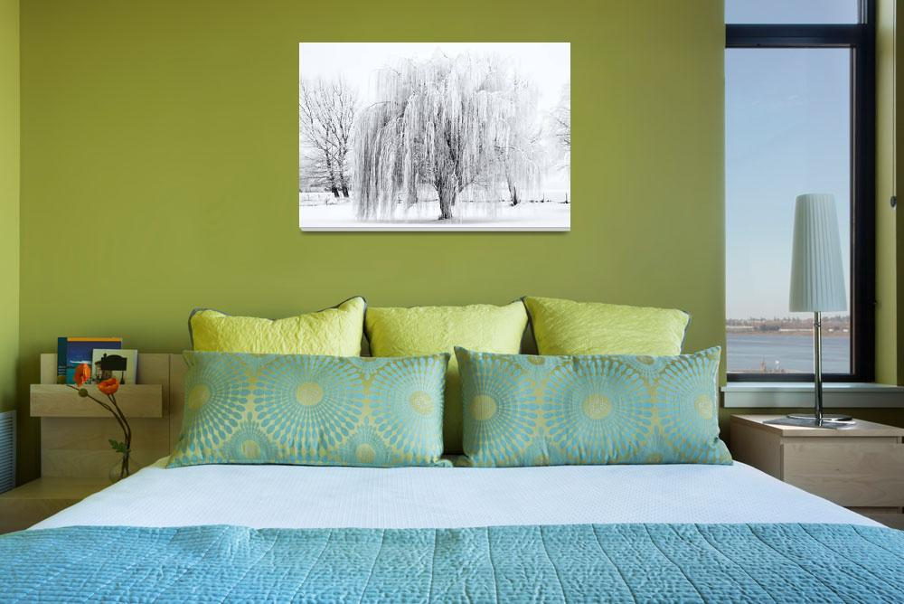 """Winter Willow&quot  (2012) by Dawsonimages"